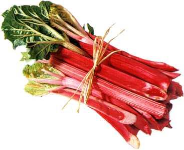 rhubarbe.jpg